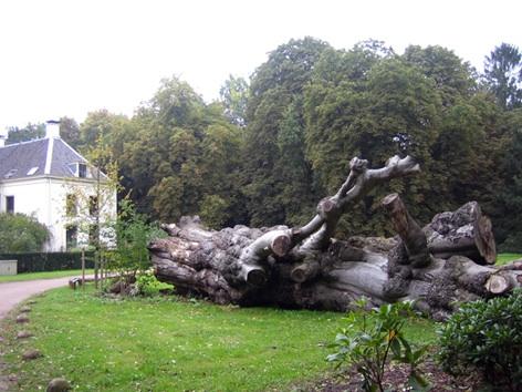 nw_amelisweerd met omgevallen boom